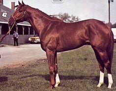 The magnificent Secretariat! Greatest horse ever! The only horse in history to win the Kentucky Derby in under two minutes.