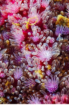 Gorgeous Patterns of the Sea: Macro Photographs of Starfish by Alexander Semenov  #textures