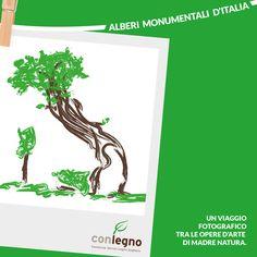 Alberi monumentali d'Italia #trees #italy