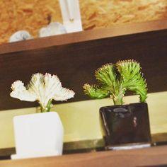 #ボタニカル#アプリ#greensnap  #多肉#多肉植物#多肉バカ同盟 # #観葉植物 #ガーデニング #グリーンインテリア #園芸 #花 #花部 #フラワー#花のある生活#花のある暮らし #succulents #cactus#gardening#containergarden #flower #flowers #flowerstagram #florist #floral #greenthumb #greenlife #plants#containergarden#botanical#igersjp