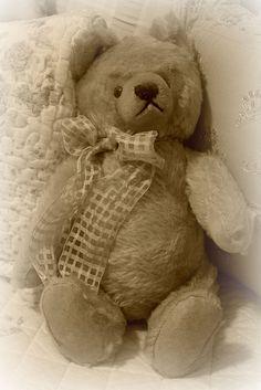 Vintage Steiff Teddy Bear by brendec7, via Flickr