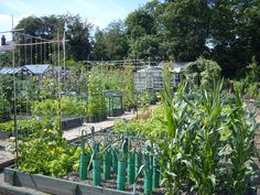 Gardening is Great - We take a look at some of the reasons why #gardening #allotment