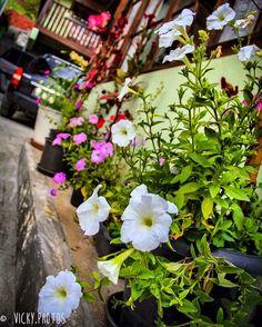 """""""A única pessoa no seu caminho é você mesmo. É hora de deixá-lo ir. Perca-se."""" (Cisne Negro) #setembrolindo #mesdaprimavera #primavera #flower #flowers #decorecomfoto @vicky_photos_infantis https://www.facebook.com/vickyphotosinfantis http://websta.me/n/vicky_photos_infantis https://www.pinterest.com/vickydfay https://www.flickr.com/vickyphotosinfantis"""
