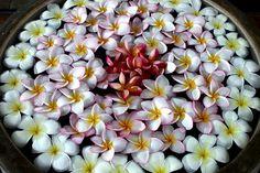 Frangipani / temple flower arrangement by ranmali_k, via Flickr