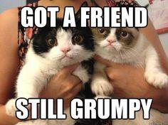 Grumpy Cat got a friend (still grumpy)