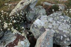 Lovely lichen.