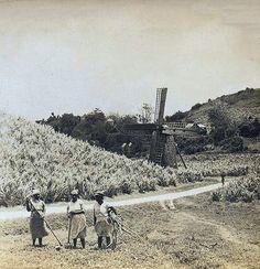 plantation barbados