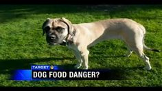 Target 11 investigates claims that Beneful is killing dogs    If you are feeding your dog Purina Beneful, or any other corn-based dog food, please take a moment to watch the following important investigative report - your dog's life may depend on it.