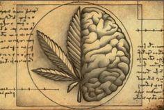 Onderzoek heeft aangetoond dat cannabis een veelbelovende behandeling kan zijn voor een aantal fysieke en geestelijke gezondheidsproblemen waaronder post-traumatische stress en chronische pijn. Een studie die deze week werd vrijgegeven suggereert dat depressie aan dit steeds groter wordende lijstje kan worden toegevoegd. Neuro-wetenschappers van de University of Buffalo's Research Institute on Addictions hebben aangetoond dat endocannabinoïden, ...