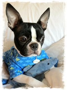 Smiley Shark Dog Pajamas