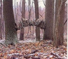 Entre deux arbres, Dunbar, Pennsylvanie, 1992 © Andy Goldsworthy