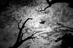 https://flic.kr/p/FNDRWN | sky home | বলাকারা উড়ে গেলে সূদুর পাড়ে আকাশ কি দেয় কভু ফিরায়ে তারে .........।  messenger of spring ............  Copyright :Abdul Malek Babul FBPS . Cell:( +880) 01715298747 & 01837805350 E mail : babul.photopassion@gmail.com  bimboo.babul@yahoo.com www.flickr.com/photos/55321771@N08
