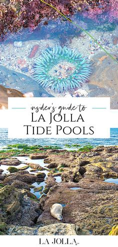 La Jolla Tide Pools, Birch Aquarium, La Jolla San Diego, San Diego Travel, Travel Inspiration, Travel Ideas, Travel Tips, Vacation Spots, Travel Usa
