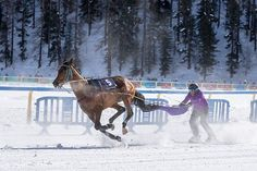 CHEVAUX COURSES HIPPIQUES PARI PMU ARGENT FACILE GAGNER ARGENT PRONOSTICS Courses Hippiques, Location Chalet, Ski, Image Types, Main Colors, Horse Racing, Switzerland, Free Images, Horses