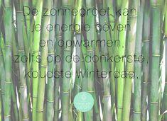 De Yoga Zonnegroet beoefen je in de ochtend. Je begint de dag energiek. In deze blog een stap voor stap uitleg van de zonnegroet, inclusief video! Health, Blog, Yoga For Kids, Health Care, Salud