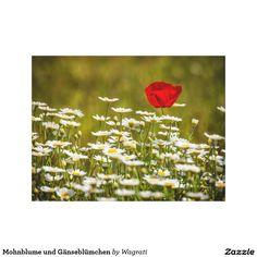 Mohnblume und Gänseblümchen Leinwand Drucke