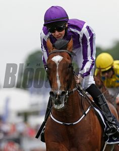 St Nicholas Abbey wins the Coronation Stakes, in a row), Epsom Trevor Jones Photo Horse Racing, Race Horses, Race Around The World, Triple Crown Winners, Order Photos, Sport Of Kings, Photo Store, Thoroughbred Horse, Saint Nicholas