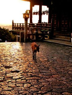 A deer in twilight at Todaiji Nigatsudo Temple.