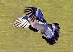 Slimbridge Wildfowl & Wetlands Trust