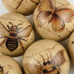 Insect Decorative Spheres~