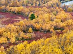 Nature's palette During autumn leaf colour, nature in Lapland puts on an unmatched display of earthy hues.