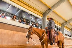 Clinic with Pat Parelli Natural Horsemanship, Romanesque, Picture Video, Clinic, Horses, Nature, Animals, Naturaleza, Animales