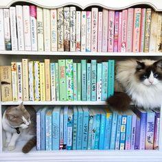 "2,870 aprecieri, 39 comentarii - Emily  (@emilyjmead) pe Instagram: ""I miss my cats so here's a bit of a throwback """