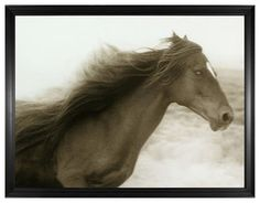 Hyden Rustic Lodge Modern Ghost Horse Photo Wall Art - Framed - Rustic - Prints And Posters - by Kathy Kuo Home