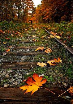 Autumn railway by caroline