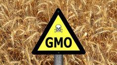 Genetics are the New Eugenics: How GMO's Reduce the Human Population | Katehon think tank. Geopolitics & Tradition