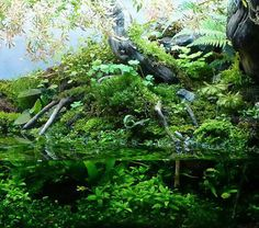 Aquatic plants fertilizer - Aquascaping - Aquatic plants - Aqua Rebell