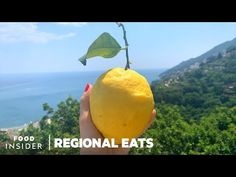 How Limoncello Is Made Using Huge Amalfi Coast Lemons | Regional Eats - YouTube Lemon Uses, Lemon Oil, Lemon Liqueur, How To Grow Lemon, Italian Olives, Carlsbad Cravings, Southern Italy, Limoncello, Amalfi Coast