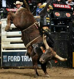 Rodeo in Texas Cowboy Girl, Cowboy Up, Rodeos In Texas, Rodeo Life, Charro, Bull Riders, Country Life, Cattle, Bad Boys