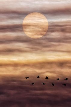 Solar Migration by Michael Menefee