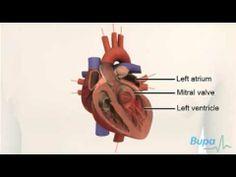 How the heart works: http://www.youtube.com/watch?v=84PrHxJri9Q#
