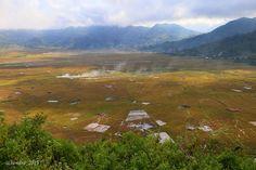 Lingko, web shaped paddy field, Cara village