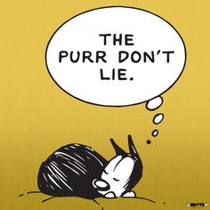 'The Purr Don't Lie' Print | MUTTS Cat Comics, Kitty, Humor, Words, Cats, Cat Cartoons, Prints, Animals, Little Kitty