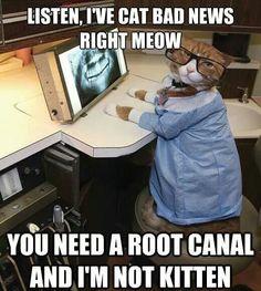 Hahaha and I'm not kitten!