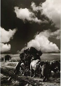 Working in the fields - Old vintage photo by Anibal Sequeira