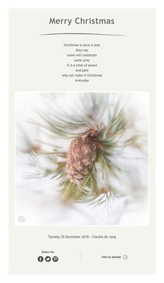 Christmas is once a year they say some will celebrate some pray it is a time of peace and paix why not make it Christmas everyday Framed Words, Simple Photo, Photo Art, Dandelion, Merry Christmas, Flowers, Plants, Inspiration, Peace
