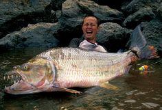 Goliath tiger fish