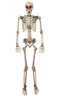 Life-Size Jointed Skeleton 6 1/2ft - Party City