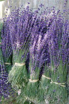 Lavender Bundles at Los Poblanos, NM Lavender Uses, Lavender Crafts, Lavender Cottage, Lavender Garden, French Lavender, Lavender Fields, Lavender Color, Lavender Flowers, Dry Flowers