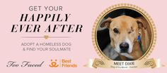 Too Faced Pooch of the Month - Meet the cuddly Dixie! Together, let's find her a home!  #crueltyfree
