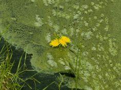 "HowStuffWorks ""What Makes Biodiesel From Algae So Exciting?"" http://science.howstuffworks.com/environmental/green-science/algae-biodiesel1.htm"