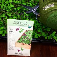 """""""Spice up your lunch with Microgreens from @botanical_interests !! On today's menu, Basil sprouts with pasta!!! . . #phelangardens #shoplocal #shopsmall #local #localbusiness #smallbusiness #garden #gardening #colorado #coloradosprings #coloradogardening  #microgreens #basil #basilsprouts #delicious #botanicalinterests"""" - phelangardens (Instagram)"""