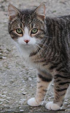 Esta es Tutifruti, impresionante sus ojos verdes.... @lantxurda