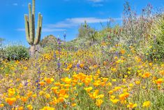 the desert is blooming - Google Search