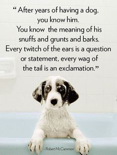 After years of having a dog you know him. You know the meaning of his stuffs and grunts and barks. Every twitch of the ears is a question or statement every wag of the tail is an exclamation.  -photo credit to the owner #dogs #cats