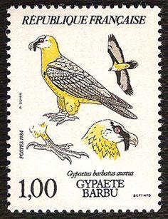 1984040-gypaete-barbu.jpg (396×516)
